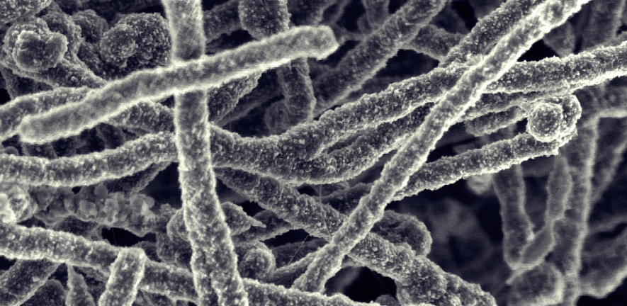 Nanotube clusters